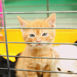 Cat in a cage waiting for adoption